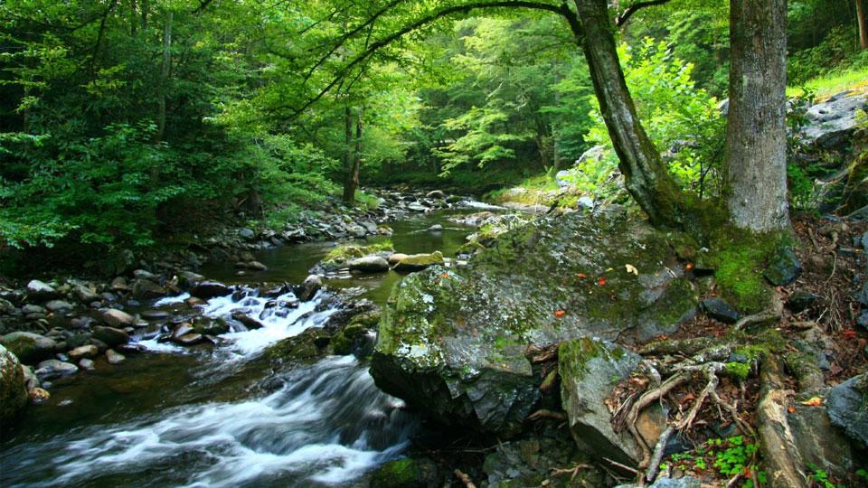 Sustentabilidad: desempeño ambiental sostenible.