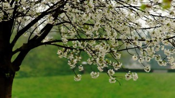 El cambio climático está alterando el tiempo biológico de la primavera.
