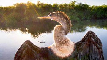 Primaveras argentinas: las aves en peligro.