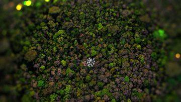Primaveras argentinas: los bosques son los pulmones de la Tierra.