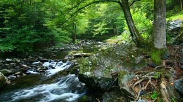 Sustentabilidad: desempeño ambiental viable a largo plazo.