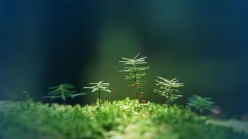 La revolución verde es algo más que una consigna de la RSE.