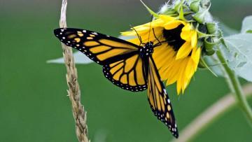 Las mariposas podrían verse perturbadas por el cambio climático en curso.