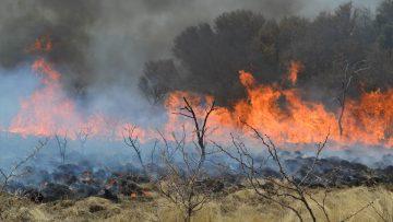 Primaveras argentinas cercadas por olas de calor, incendios y sequías.