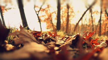 Equinoccio de marzo: el otoño ya no es lo que solía.