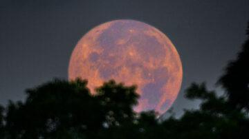 Luna pascual