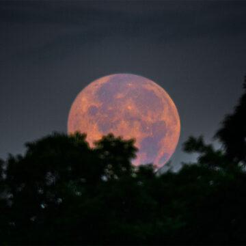 Veronese: Luna pascual.