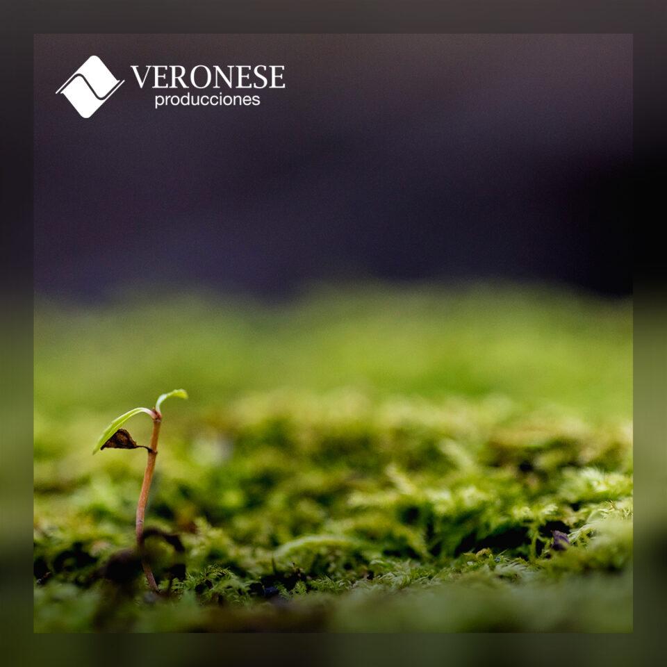 Veronese Producciones: Día Internacional de la Madre Tierra.